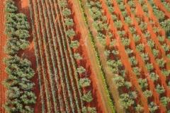 Luftaufnahme Istrien - Wein und Olivenkulturen auf roter Erde
