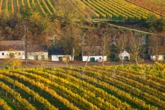 Wagram, Weinbaugebiet im Herbst. Im Hintergrund die Kellergasse