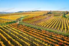 Wagram, Weinbaugebiet im Herbst nahe Ottenthal. Luftaufnahme.
