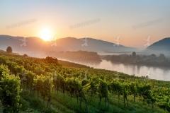 Sonnenaufgang, Weinriede Achleiten in der Wachau.