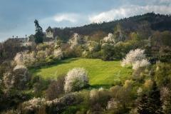 Burg Oberranna zur Baumblüte im Frühjahr. Mühldorf, Wachau.