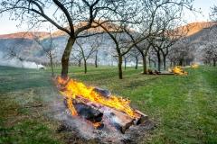 Spätfrostschutz im Frühjahr von Marillenkulturen in der Wachau